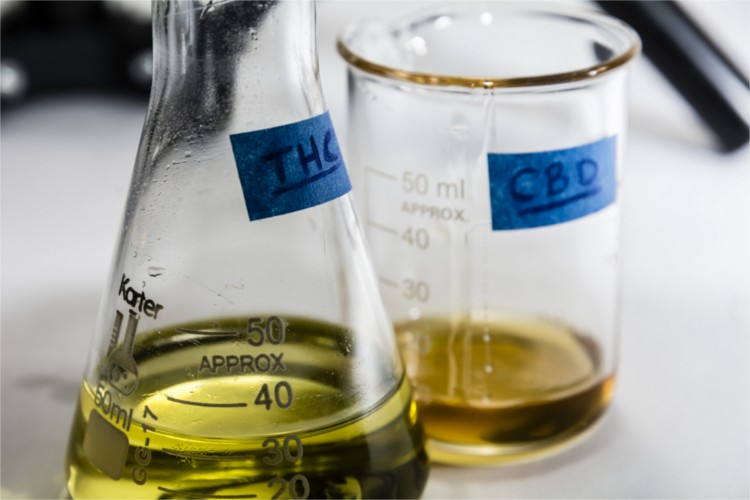 difference between cbd oil and thc oil