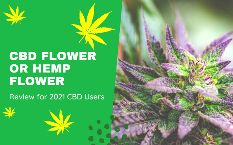 CBD Flower or Hemp Flower